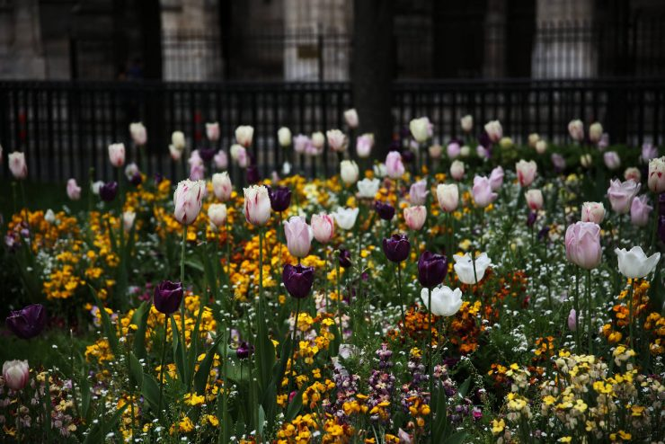 Finding the spirit of Paris - a mini guide | Due fili d'erba | Two blades of grass | Thais FK | Tulips