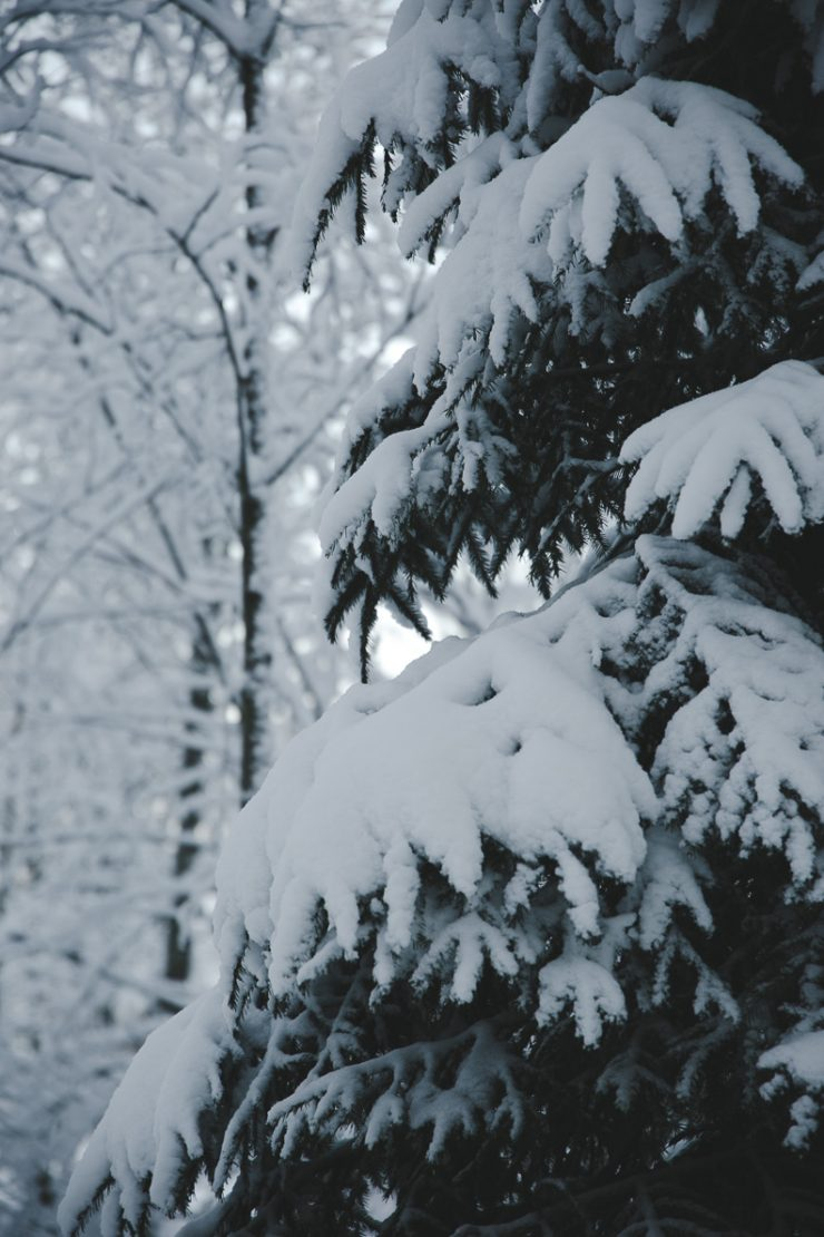 Sleeping survival guide for Nordic countries | Finnish forest in winter | Winter Wonderland | on Due fili d'erba | Two blades of grass
