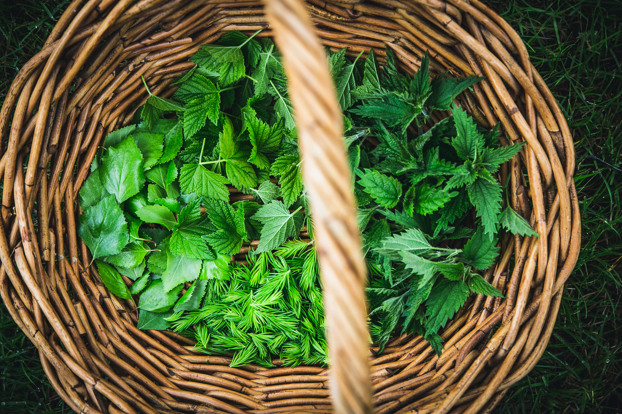 Nordic Foraging - A guide to the Nordic wild on The Adagio Blog by Thais FK
