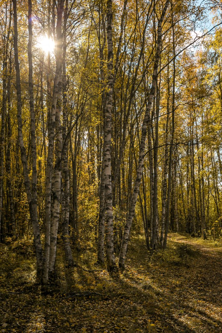 Autumn in Finland - The Adagio Blog by Thais FK