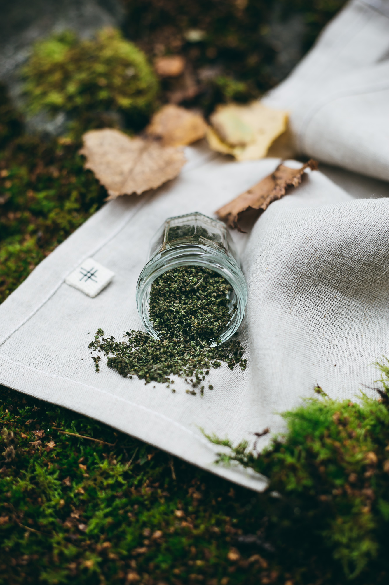 The Nordic Superfood: Stinging Nettle Seeds - Nordic Foraging by The Adagio Blog